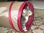 SmartyKat CrackleChute Collapsible Tunnel Cat Toy