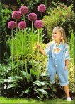 Gladiator Flowering Onion Allium 4 Bulbs - Deer Proof! - 16-18 cm Bulbs