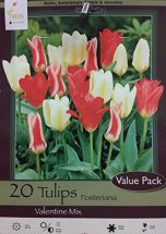 Tulip Value Pack Valentine Mixture- Fosteriana- 20 Bulbs